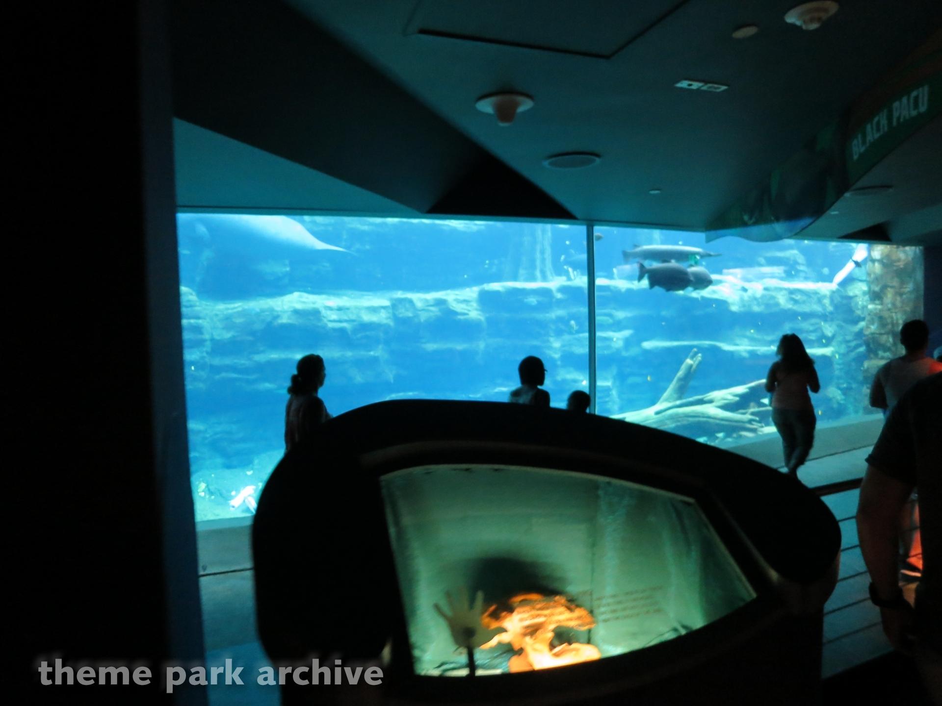 Turtle Trek at Sea World Orlando   Theme Park Archive