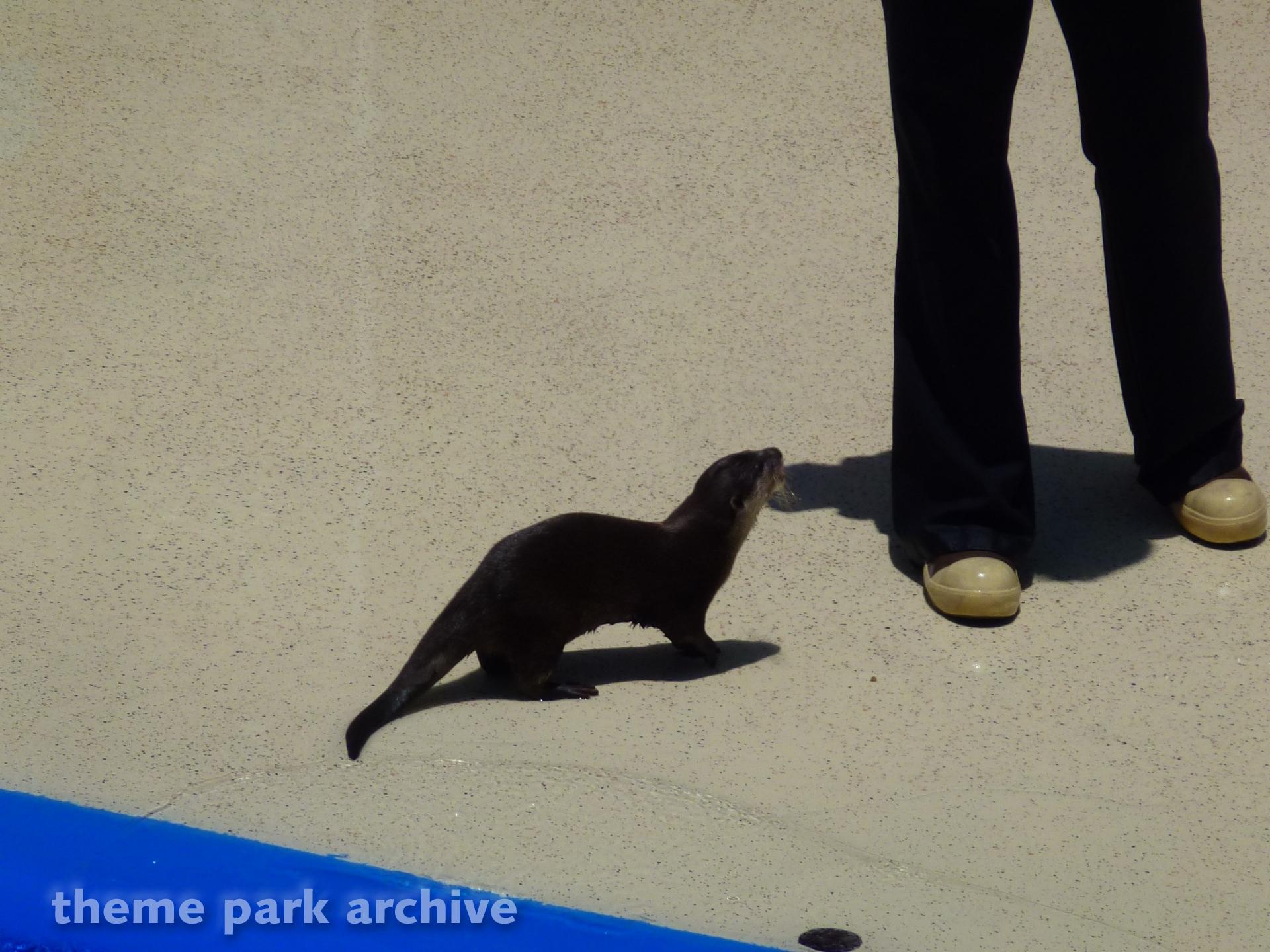 Sea Lion and Otter Stadium at Sea World San Diego