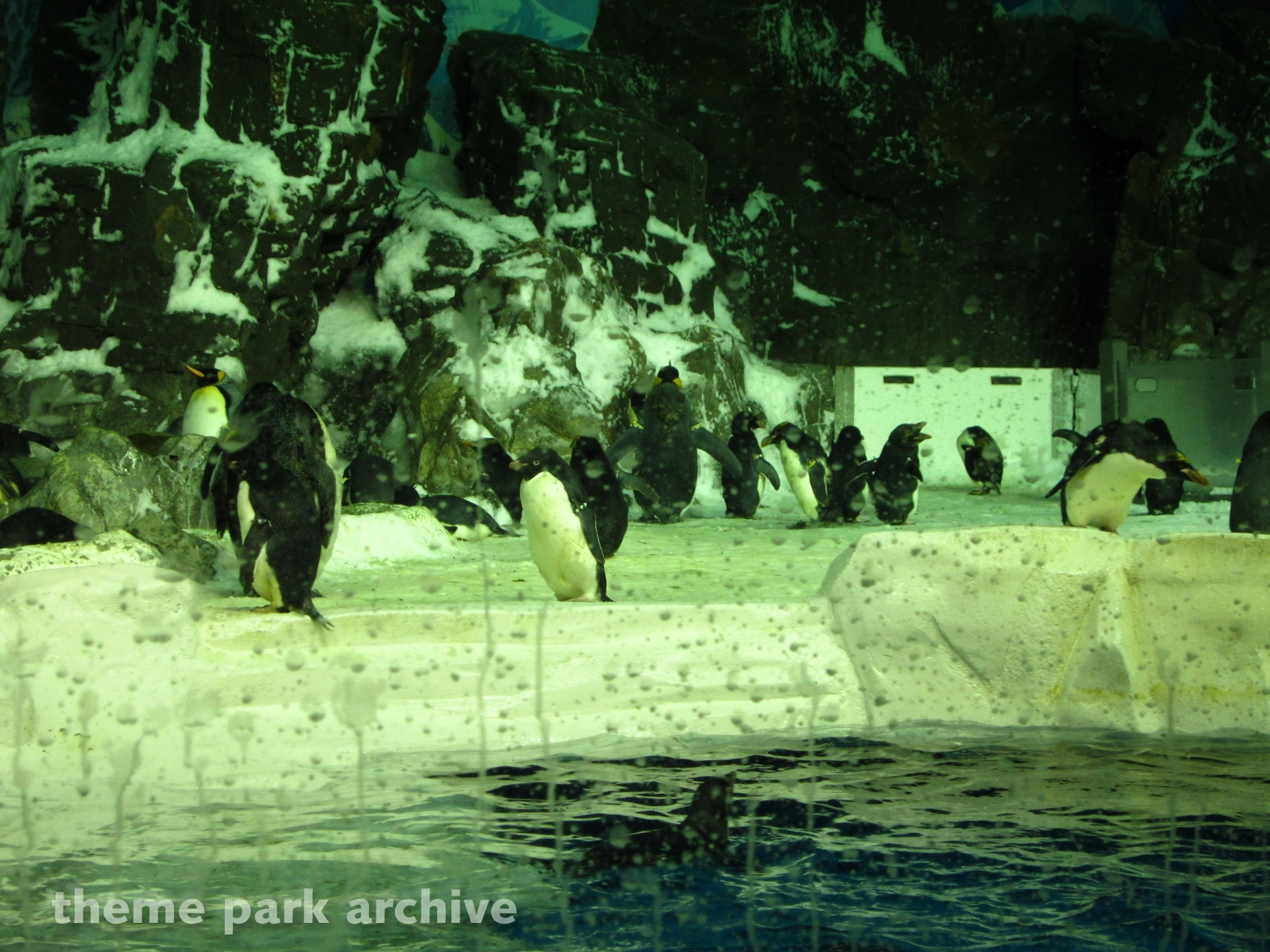 Penguin Encounter at Sea World San Diego