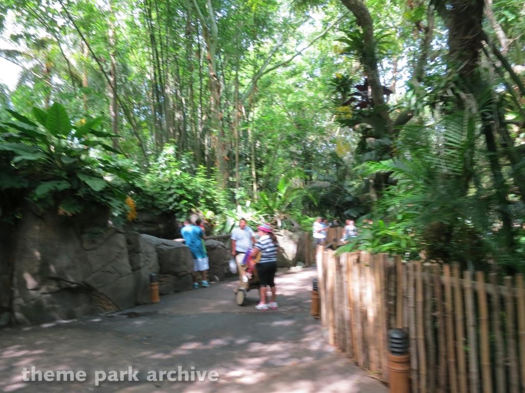 Oasis at Disney's Animal Kingdom