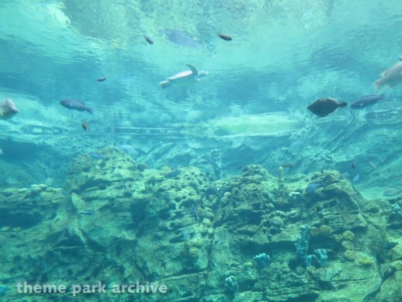 Turtle Trek at SeaWorld Orlando