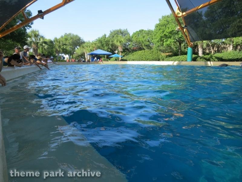 Dolphin Cove at SeaWorld San Antonio