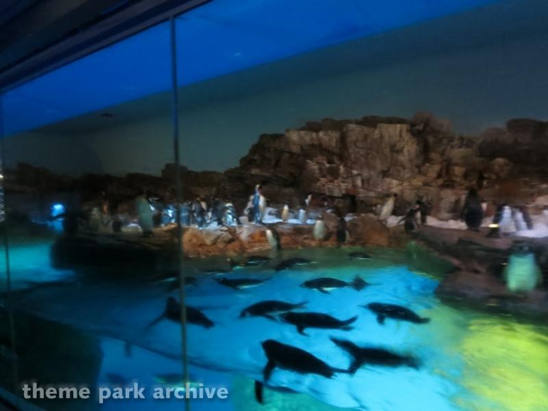 Penguin Encounter at SeaWorld San Antonio