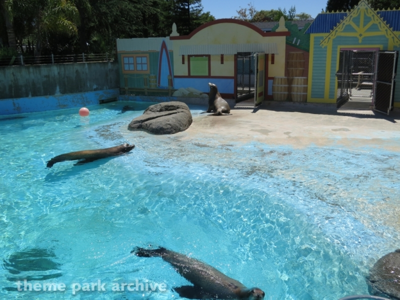 Seal Cove at Six Flags Discovery Kingdom