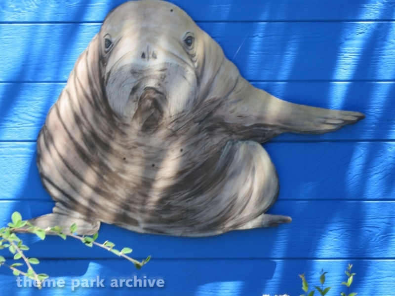 Walrus Experience at Six Flags Discovery Kingdom