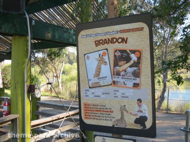 Giraffe Encounter at Six Flags Discovery Kingdom