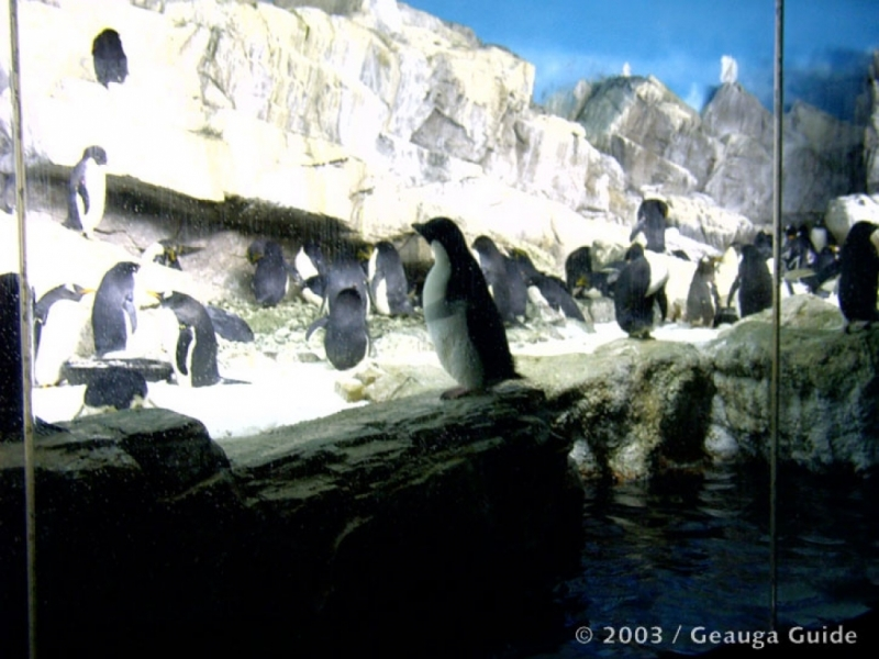 Penguin Experience at Geauga Lake