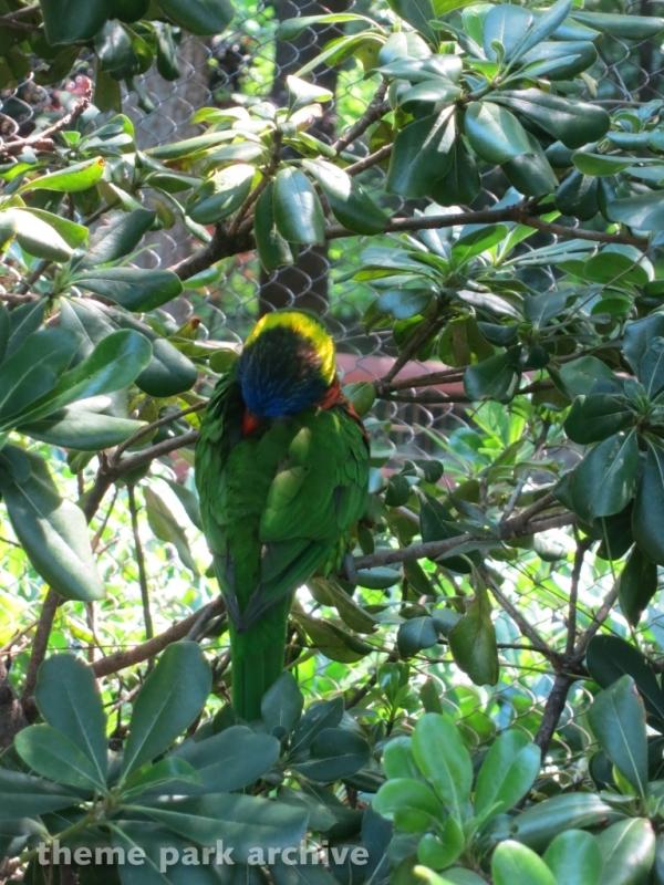 Jack Hanna's Wild Reserve at Busch Gardens Williamsburg