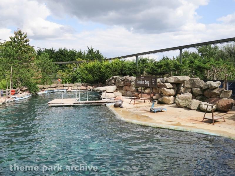 Sealion Bay at Chessington World of Adventures Resort