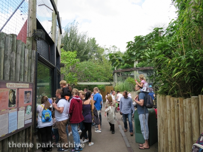 Chessington Zoo at Chessington World of Adventures Resort