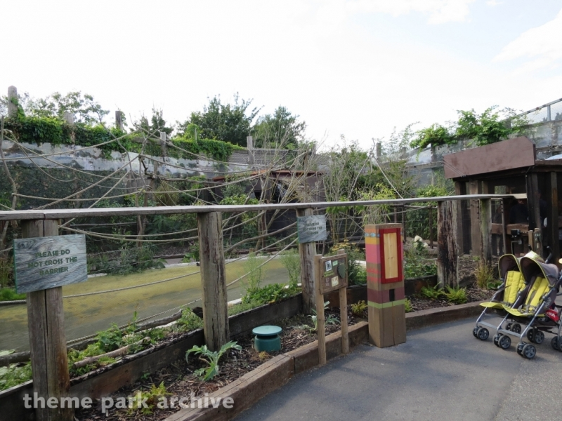 Amazu at Chessington World of Adventures Resort