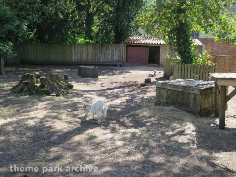 Muddy Duck Farm at Flamingo Land