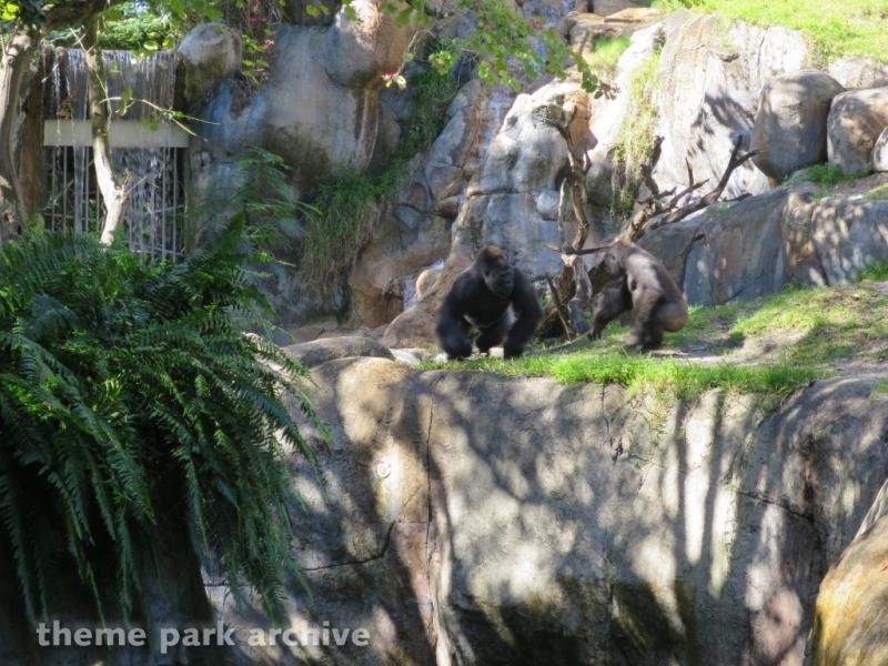 Myambe Reserve at Busch Gardens Tampa