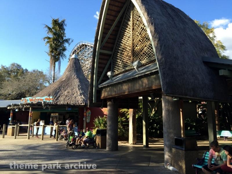 Gwazi at Busch Gardens Tampa