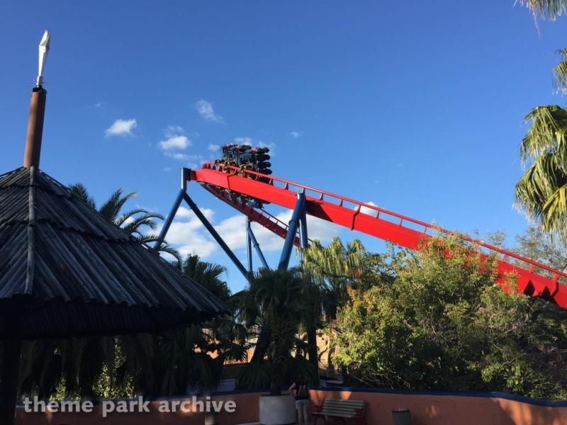 Sheikra at Busch Gardens Tampa