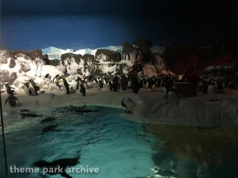 Penguin Encounter at Sea World San Diego