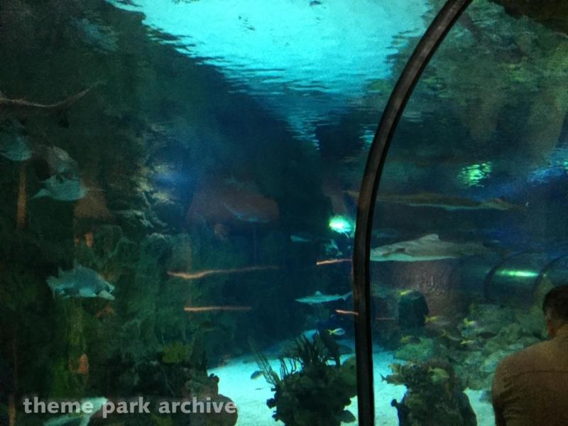 Shark Encounter at Sea World San Diego