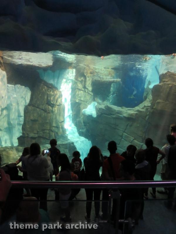 Antarctica Empire of the Penguin at SeaWorld Orlando