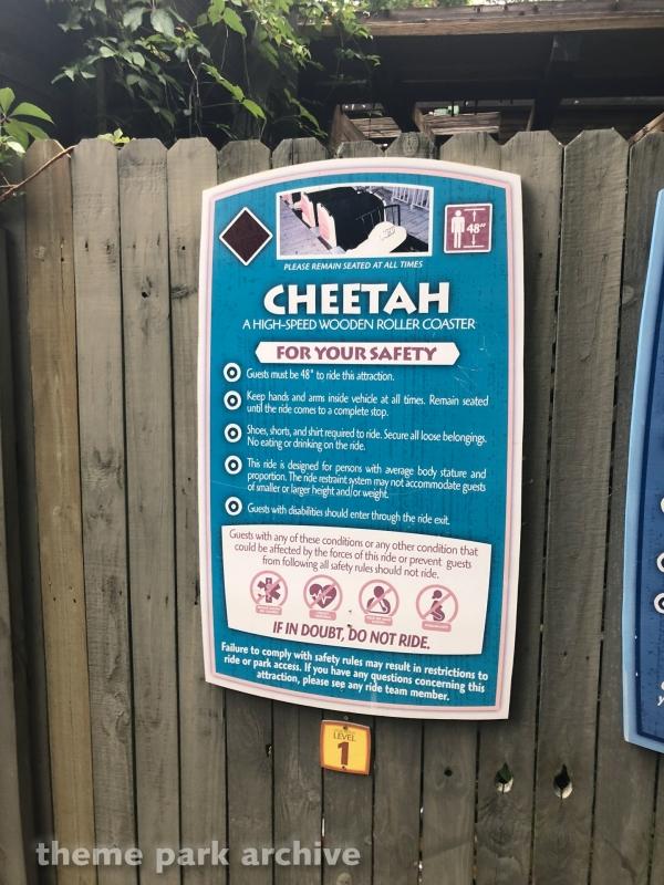 Cheetah at Wild Adventures