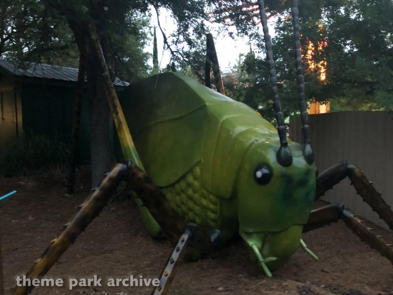 Mega Bugs at Wild Adventures