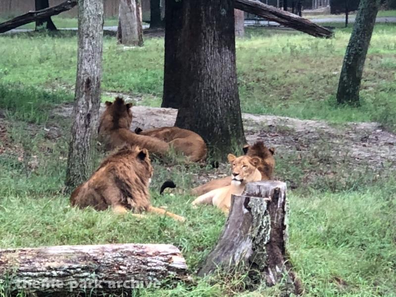 Safari Off Road Adventure at Six Flags Great Adventure