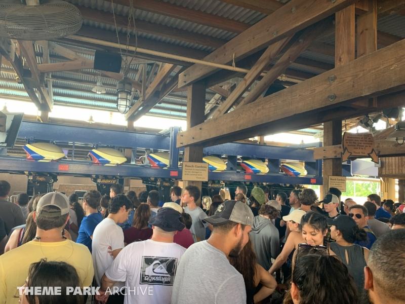 Montu at Busch Gardens Tampa