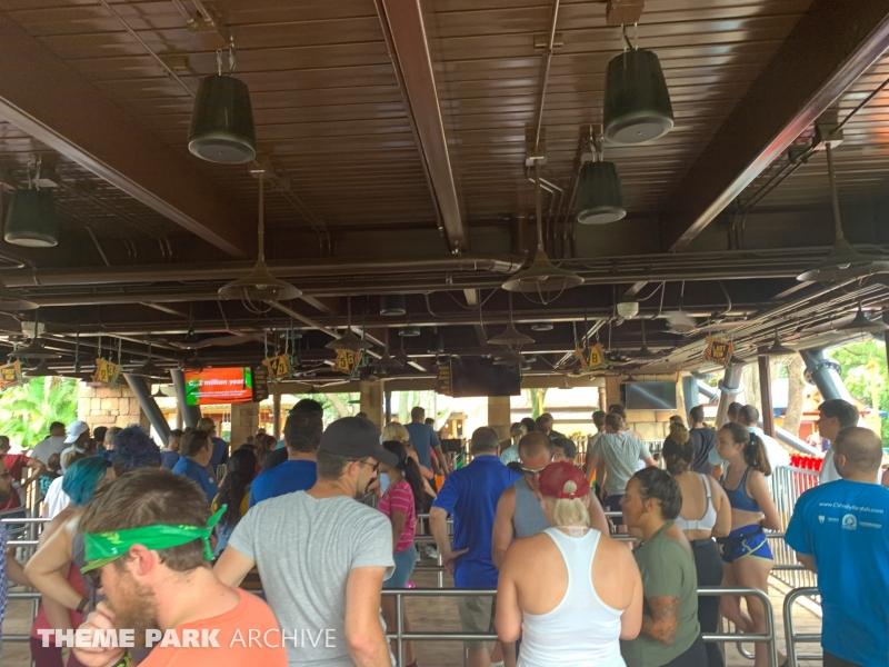 Tigris at Busch Gardens Tampa