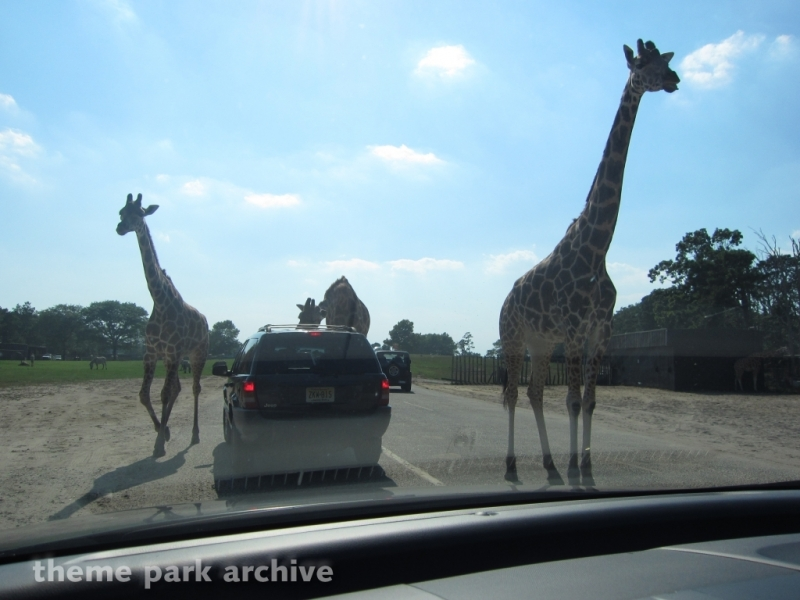 Wild Safari at Six Flags Great Adventure