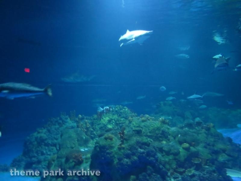 Sharks   The Coral Reef at SeaWorld San Antonio