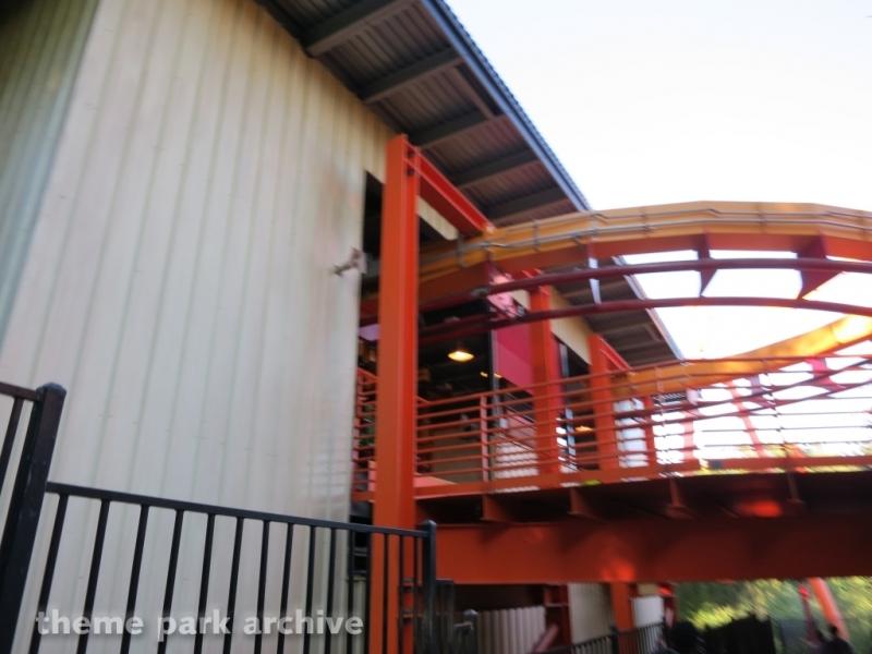 Tatsu at Six Flags Magic Mountain